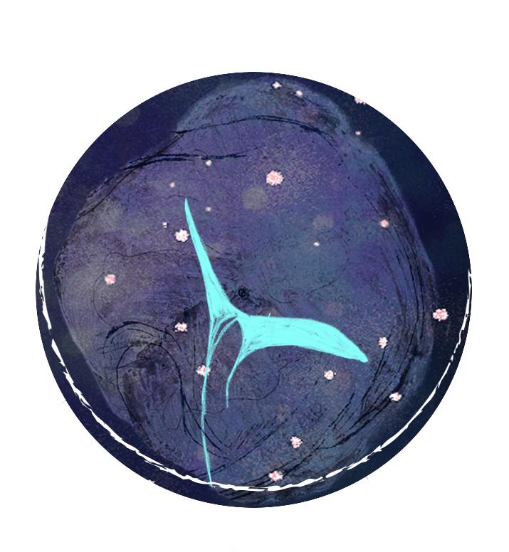 Les nuits de la baleine